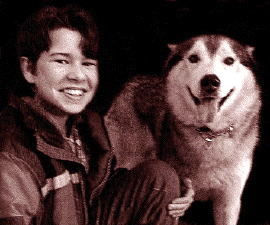 an introduction to the life with a siberian husky Learn the history of a siberian husky and how they came to prominence find examples of the versatility and adaptability.